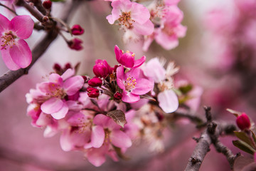 floral spring background branch