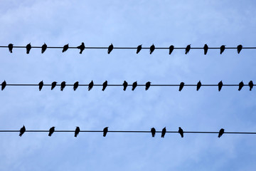 Silhouettes of birds sitting on wires over blue sky