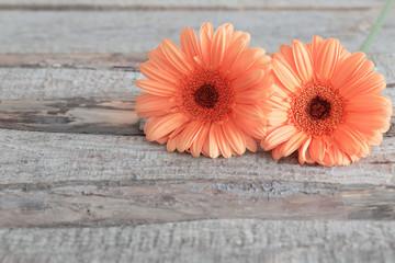 Poster Gerbera gerbera flowers on wooden background