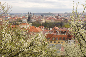 View on the spring Prague City with green Nature and flowering Trees, Czech Republic