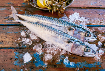 Mackerel fish on ice with copy space