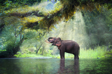 Foto auf Acrylglas Olivgrun Wild elephant in the beautiful forest at Kanchanaburi province in Thailand, (with clipping path)