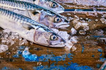 Three mackerel fish heads surrounded by ice