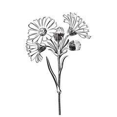 Hand drawn bouquet of daisy flowers isolated on white background