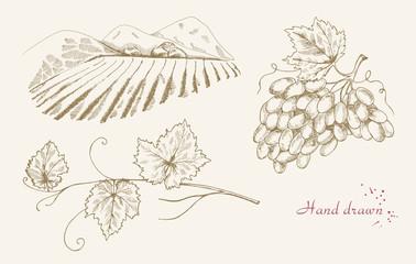 Hand drawn vine set