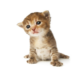 Cute grey striped kitten isolated