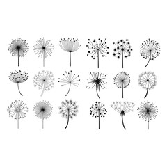 Dandelion Fluffy Seeds Flowers Set