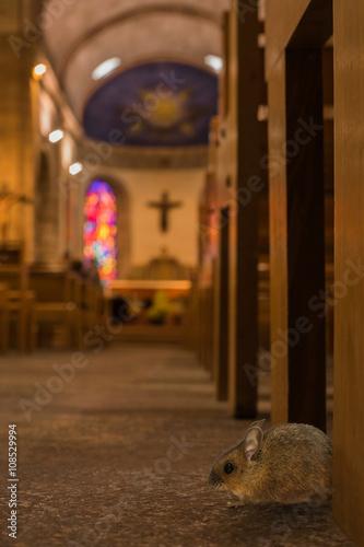 Arme Kirchenmaus In Einer Kirche Sucht Futter Stockfotos Und