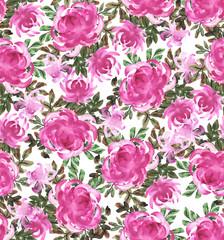 Pink chrysanthemums on white