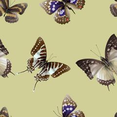 butterfly seamless 06