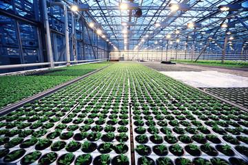 Fototapeta agribusiness greenhouse seedling spring obraz