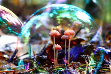 small mushrooms mold