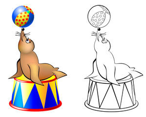 Colorful and black and white pattern seal in a circus, vector cartoon image.