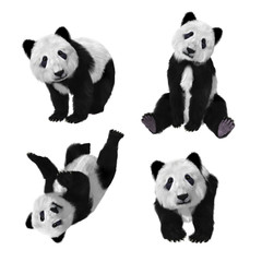 Illustration of a baby panda bear in various poses on a white background. 3d rendering