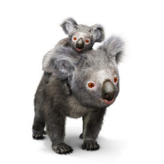 Koala bear and her baby looking toward the camera on a white background. 3d rendering