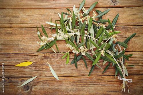 Rami di ulivo in fiore immagini e fotografie royalty for Acquisto piante ulivo