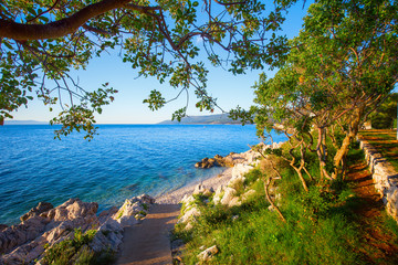 Amazing rocky beach with cristalic clean sea water with pine trees n the coast of Adriatic Sea, Istria, Croatia