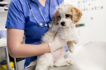 Mid-section of vet holding dog