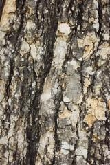 Tree bark of background