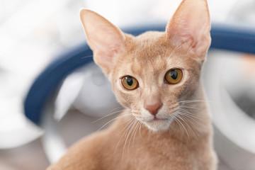 Cute little red cat.