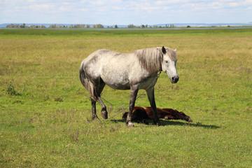 Horse grazing on farm field