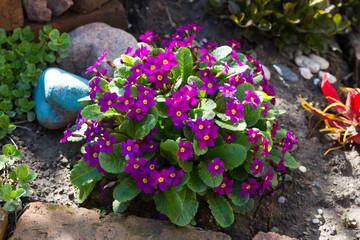 Purple flowers shrub