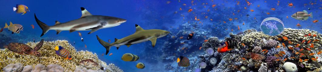 Aluminium Prints Under water Panorama of marine species