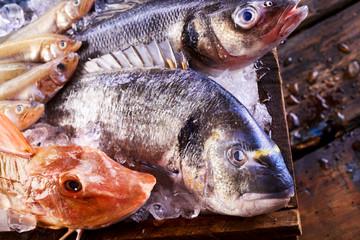Freshly caught variety of edible saltwater fish