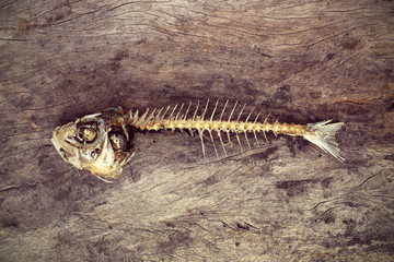 eaten fish with head and tail
