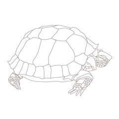Hand-drawn turtle. Vector.