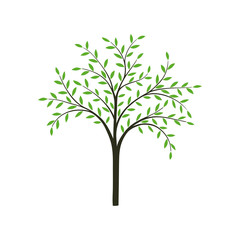 Stylized tree in vector.