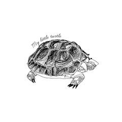 Hand-drawn turtle. Vector.