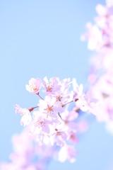 淡い春景色