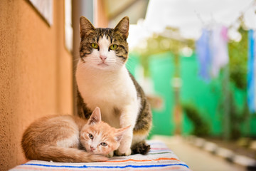 Two cute cats sitting next to wall
