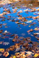 水面に浮かぶ落ち葉