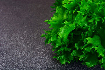 Healthy and diet food: green salad Isolated on Dark Background.