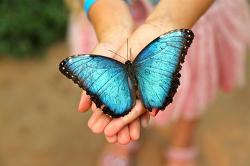 Blue Morpho Butterfly in girls hands