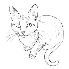 Vector sketch of cat.