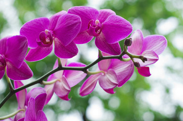 orchid flower with green i