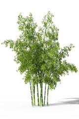 A group of fresh green bamboo trees isolated on white background. 3d illustration.