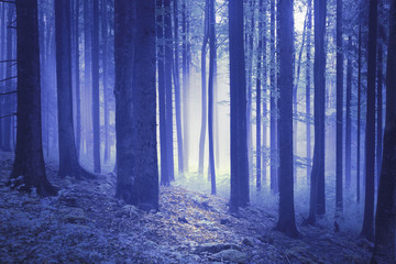 Wall Murals Forest Dreamy blue colored light in the fantasy woods.