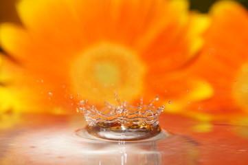 Wassertropfen fotografie