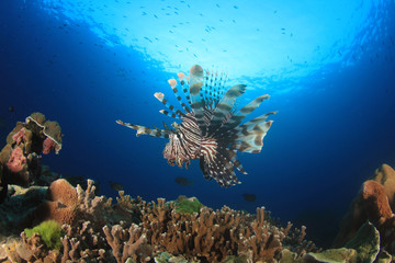Lionfish on coral reef underwater in ocean