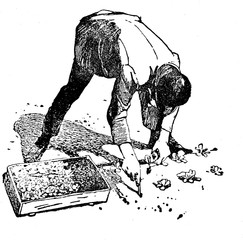 Agriculture vintage illustration, farmer saws plants in holes in the soil at regular distance