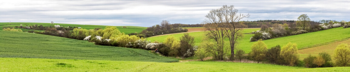 Panoramic shot of spring landscape with green fields Wall mural