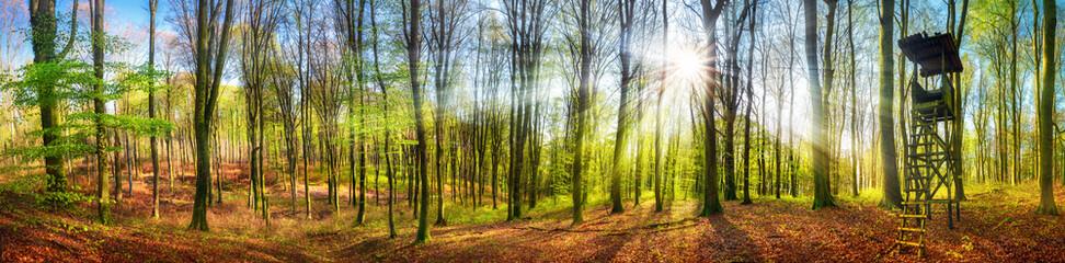 Wall Mural - Panorama von Wald mit Sonne im Frühling