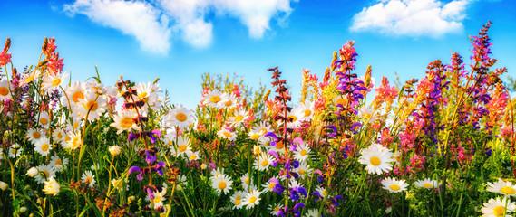 Dichte wachsende Blumen auf einer Wiese und blauer Himmel