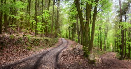 Wall Mural - Forstweg im schönen Wald lädt zum Wandern ein