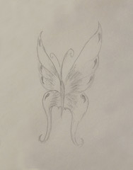 illustration of a butterfly, pencil drawing on paper.