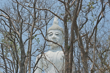 Buddha face and autumn forest